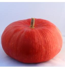 Potiron rouge vif d'Etampes (environ 3kg)