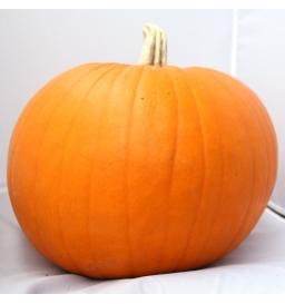 """Potiron """"Halloween""""(entre 5 et 6 kg)"""