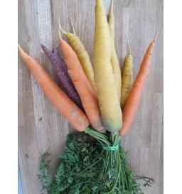 Botte de carottes couleurs