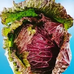 """Coup de cœur sur nos légumes d'hiver 😍.Tantôt boudé, tantôt très attendu, l'hiver nous réserve de beaux produits : choux de pontoise, endives, topinambour ou encore le traditionnel """"carottes, navets, poireaux""""!Dévorez les des yeux (et de la bouche) et partagez avec nous vos plus belles et folles idées en commentaire de cette publi! 😁Merci au @jardinsimbermais pour ces magnifiques produits !🥬🍐🥦🍎🥕🧅🥝🍏🥔🌶️🧄#legumesdhiver #jardindimbermais #produitsdesaison #chouxdepontoise #hivercool🐞🐞🐞🐞🐞🐞🐞 Ecocinelle boutiqueEpicerie indépendante ouvert du mardi au vendredi : 10h-13h / 15h-19h etle samedi : 9h30-13h30 / 15h30-19h12 rue nationale 78940 LA QUEUE LEZ YVELINESTél :09 51 52 49 48----Parking à 20 mètres------N'hésitez pas à liker, partager, commenter et donner votre avis sur google pour nous soutenir !------ #local #vrac #locavore #vracindependant #zerodechet #epicerieindependante #ecoresponsable #zerowaste #antigaspi #yvelines #produitslocaux #produiteniledefrance #laqueuelezyvelines #galluis #montfortlamaury #garancieres #ecocinelle"""