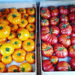 Ça sent l été chez Ecocinelle !! Tomates jaunes, tomates coeur de bœuf, concombres, groseilles, fraises mara des bois.. etc 🍓🍅Retrouvez également un dépôt de pains et brioches du @moulindesmoissons tous les jours à la boutique 🥖🍞🟢🟢🟢🟢🟢Ecocinelle boutiqueEpicerie indépendante ouvert du mardi au vendredi : 10h-13h / 15h-19h etle samedi : 9h30-13h30 / 15h30-19h12 rue nationale 78940 LA QUEUE LEZ YVELINESTél :09 51 52 49 48----Parking à 20 mètres------N'hésitez pas à liker, partager, commenter et donner votre avis sur google pour nous soutenir !------ #local #vrac #locavore #vracindependant #zerodechet #epicerieindependante #ecoresponsable #zerowaste #antigaspi #yvelines #produitslocaux #produiteniledefrance #laqueuelezyvelines #galluis #montfortlamaury #garancieres #ecocinelle #lesjardinsdimbermais #lemoulindesmoissons