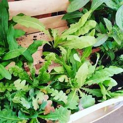 """Encore quelques arrivages de plants : fleurs : immortelles, statices, nigelle et gomphrena Des plants de tomates """"ananas"""", """"andine cornue"""" et """"montfavet"""" , courgettes et basilic Thaï, vert et pourpreLégumes: poireaux nouveaux, oignons blancs nouveaux, choux petsaï, choux raves, persil .... Fruits : fraises """"mara des bois """" 🤗😋😋 ----- Ecocinelle BoutiqueEpicerieindépendantedu mardi au vendredi : 10h-13h / 15h-19h et le samedi : 9h30-13h30 / 15h/19h12 Rue Nationale - 78940 LA QUEUE LEZ YVELINES Tél: 09 51 52 49 48 www.ecocinelle.netParking à 20 mètres ----- N'hésitez pas a liker, partager, commenter, donner votre avis sur Google pour nous soutenir💚💛 ----- #local #vrac #vracindependant #zerodechet #ecoresponsable #zerowaste #antigaspi #commercedeproximite #locavores #yvelines #produiteniledefrance#fleurs #immortelles #plantations"""