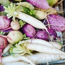 Retour sur notre dej familiale de dimanche 😊 : on a testé toutes les sortes de radis (enfin presque 😜) : blue candle, green meat, noir ! C'est beau et puis c'est bon 😍😋 !! Et il y en a pour tous les goûts du plus piquant au plus doux 💚❤#radis #legumeslocaux #circuitcourt #producteurslocaux #ecocinelle #local #vrac----- Ecocinelle boutiqueEpicerie indépendante ouvert du mardi au vendredi : 10h-13h / 15h-19h et le samedi : 9h30-13h30 / 15h30-19h 12 rue nationale 78940 LA QUEUE LEZ YVELINES Tél :09 51 52 49 48 ---- Parking à 20 mètres ------ N'hésitez pas à liker, partager, commenter et donner votre avis sur google pour nous soutenir ! ------ #local #vrac #locavore #vracindependant #zerodechet #ecoresponsable #zerowaste #antigaspi #yvelines #produiteniledefrance